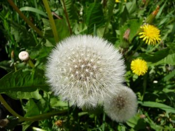 7 Tips to Inhibit Weed Growth in the Garden