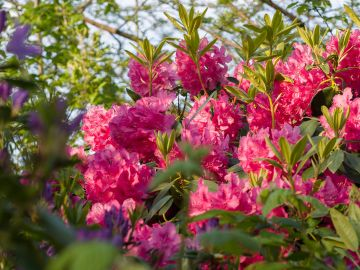 Tips for Creating a Beautiful Garden if You Have Acidic Soil